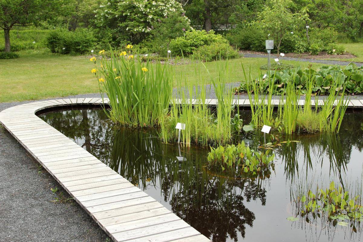 Kuva: oulun yliopiston kasvitieteellinen puutarha