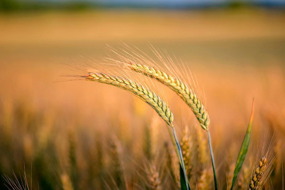 Kuva: Maaseutu