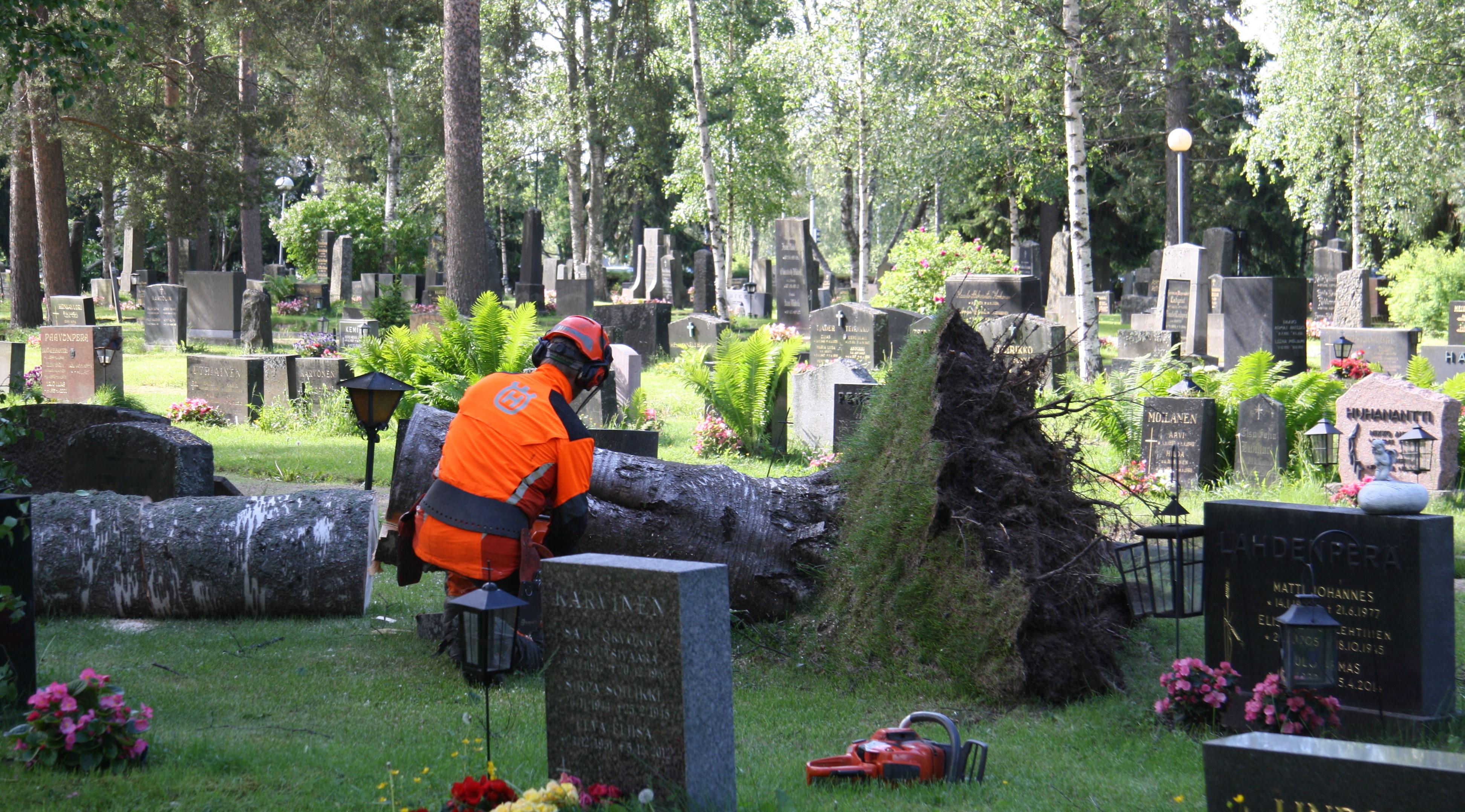 Metsuri poistaa hautakivien päälle kaatunutta puuta maanantaiaamuna.
