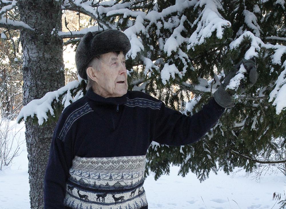 Pentti Prokkola seisoo lumisen kuusen edessä käsi kuusen oksassa.