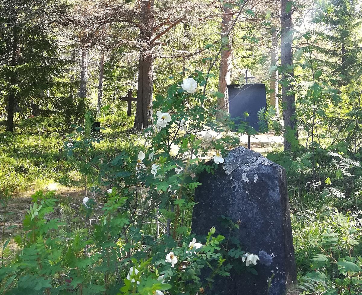 Aurinko siivilöityy puiden välistä Hailuodon metsähautausmaalle.