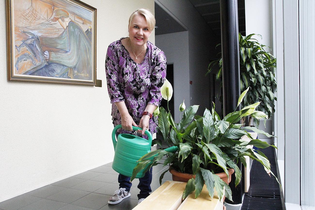 Marika Moilanen kastelee viherkasvia Haukiputaan seurakuntakeskuksessa.