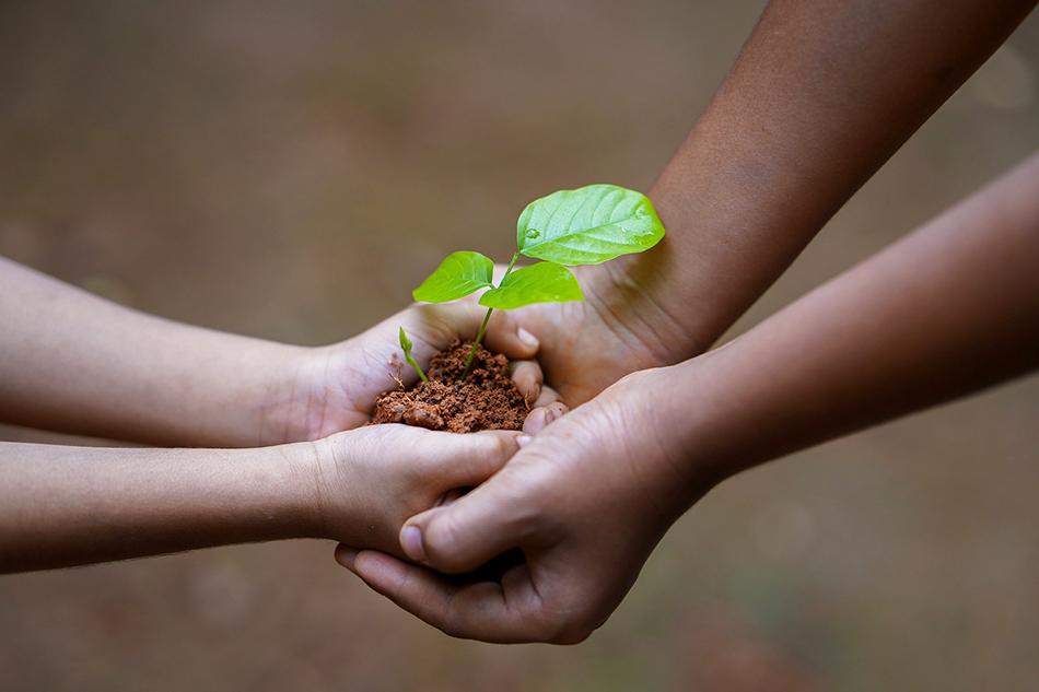 Kahden ihmisen kädet yhdessä ja käsien välissä on taimi.